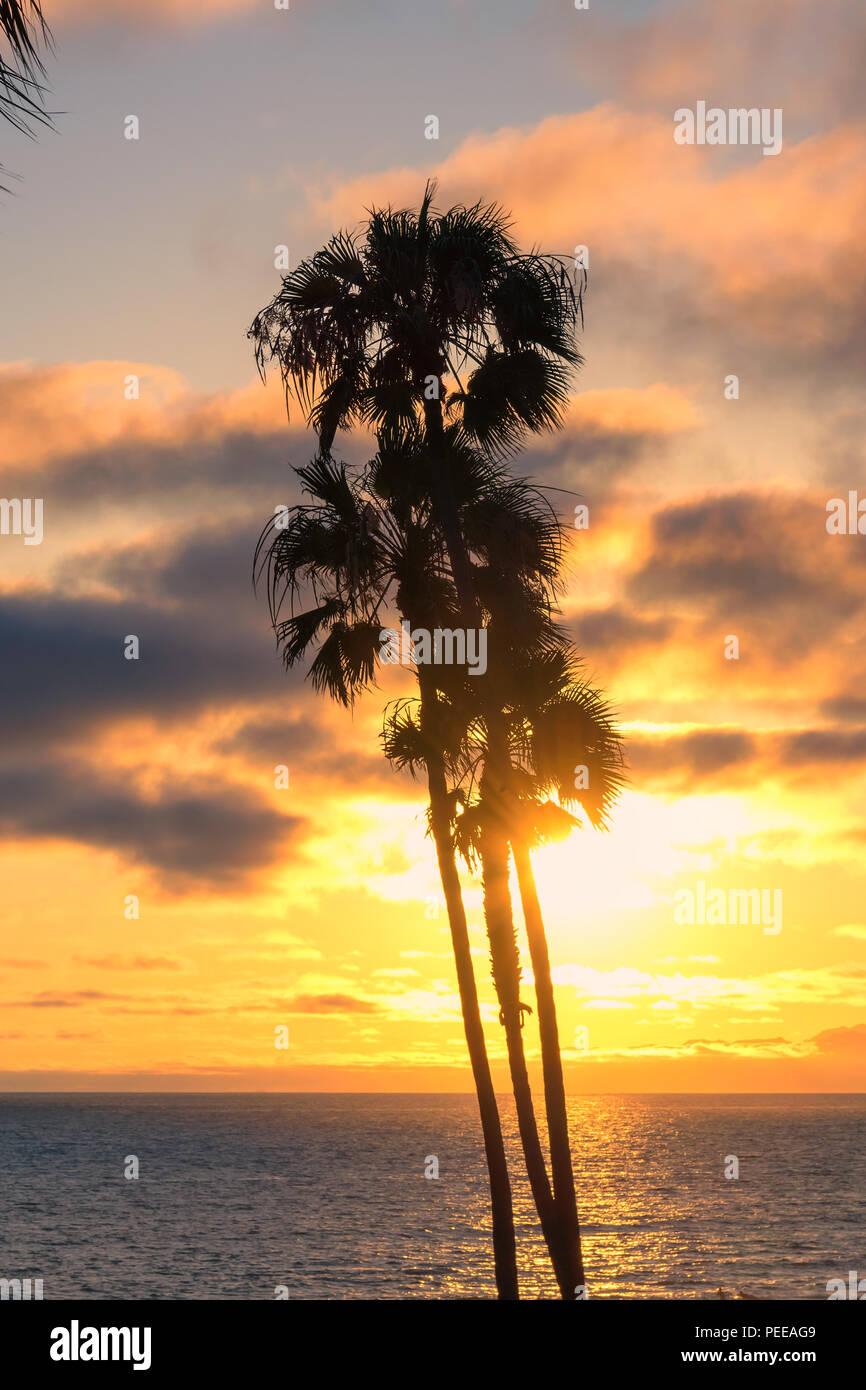 Schöner Strand mit Palmen bei Sonnenuntergang auf Jamaika Paradise Island. Stockbild