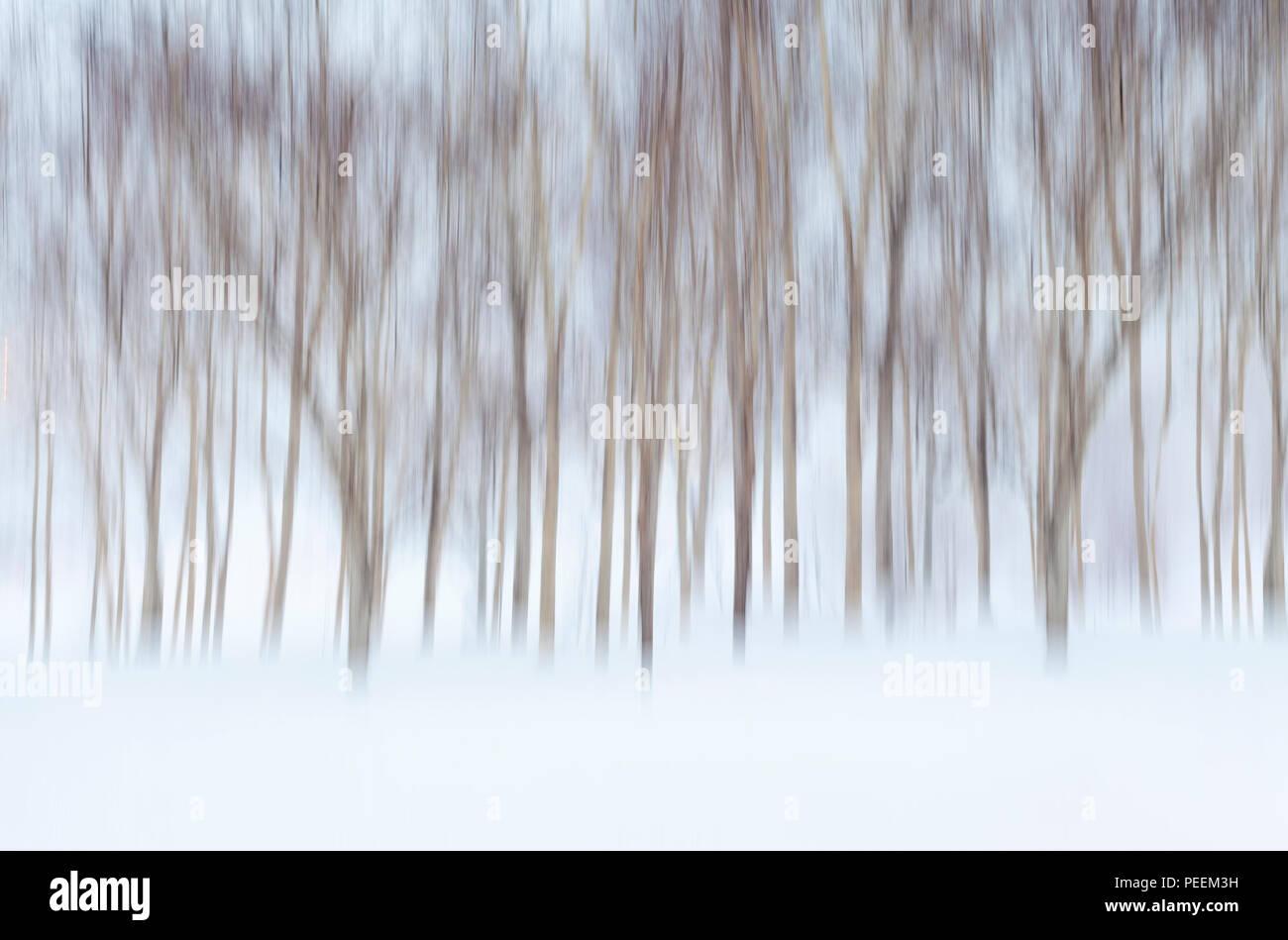 Abstrakte winterliche Hintergrund mit Bewegung verwischt Birken und Schnee Stockbild