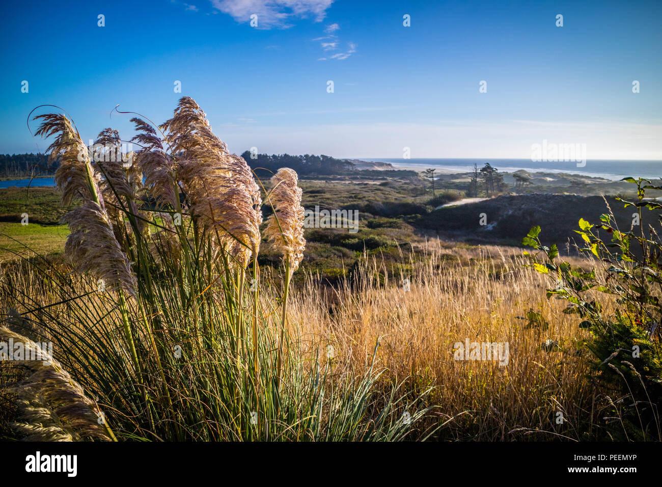 Heceta Head Lighthouse State Park malerische Sicht in Florence, Oregon Stockbild