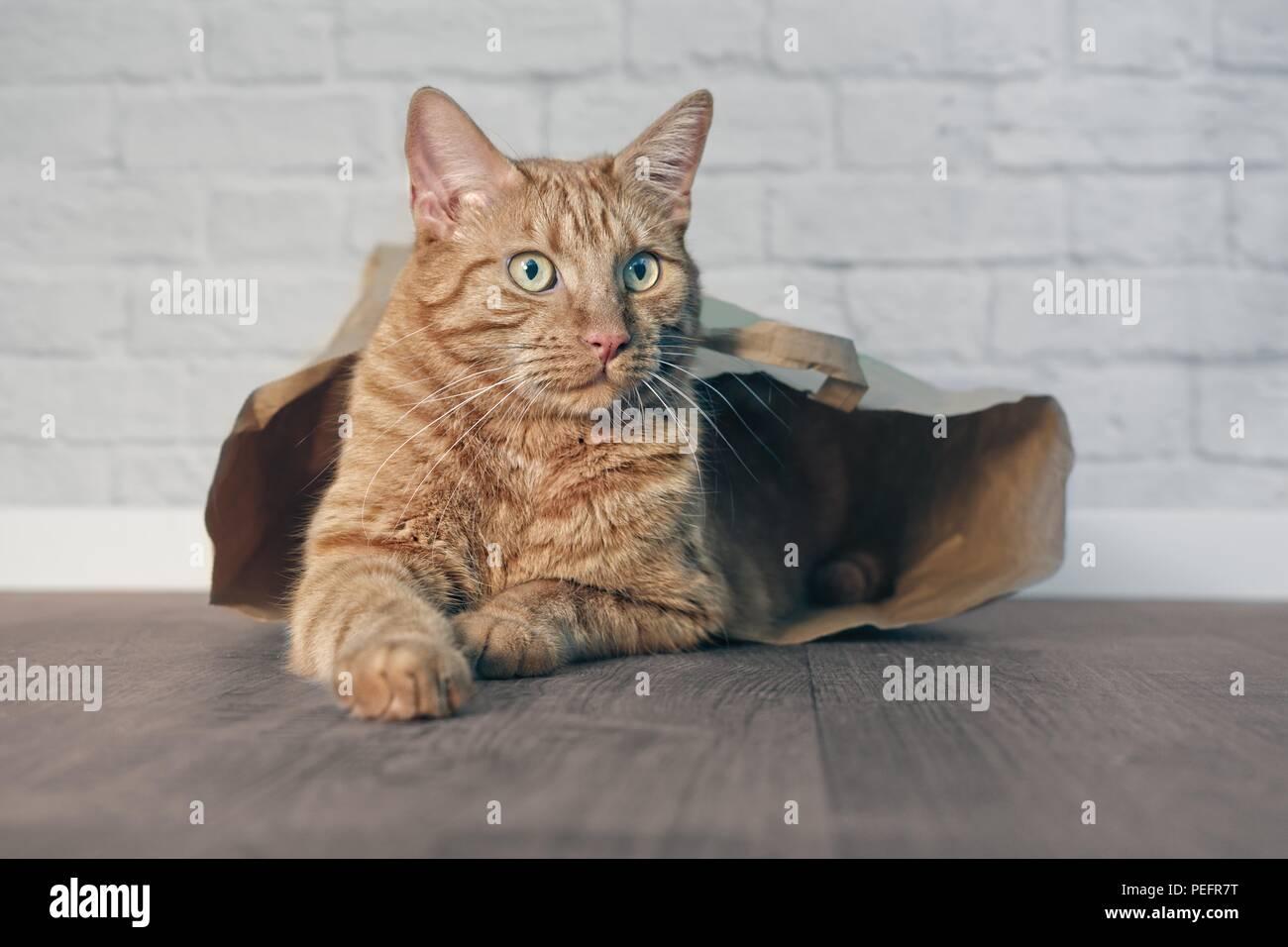 Ingwer süße Katze liegend in eine Papiertüte und seitwärts. Stockfoto