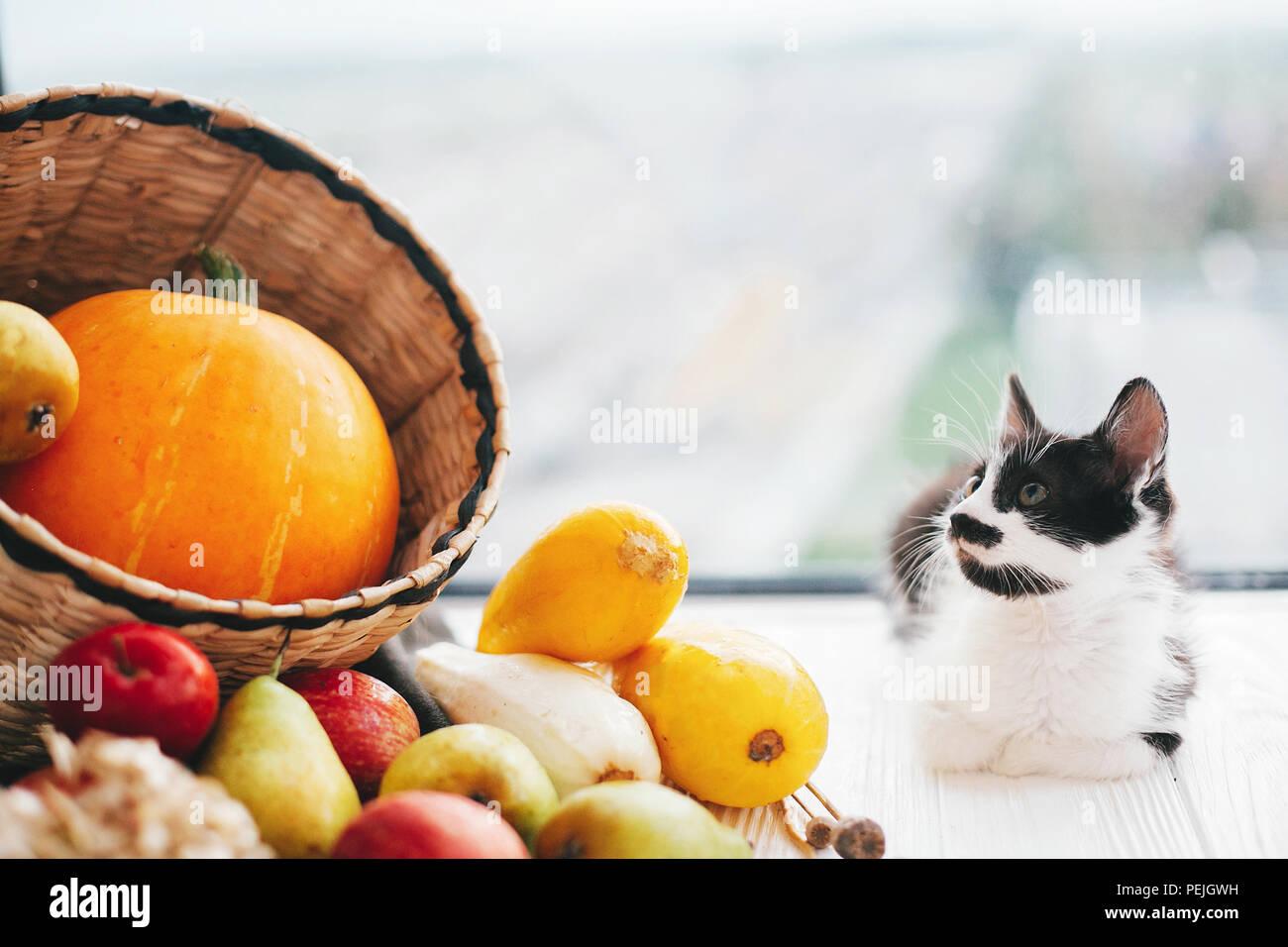 Happy Thanksgiving Und Halloween Ernte Hallo Herbst Konzept Mit Platz Fur Text Adorable Kitty Bei Kurbis Zucchini Apfel Birnen