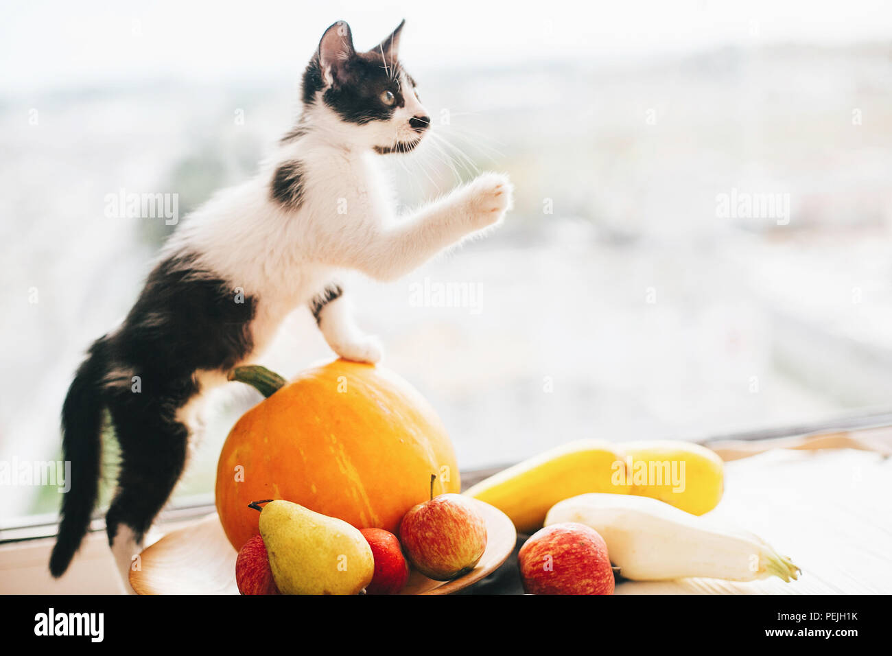 Happy Thanksgiving Und Halloween Ernte Hallo Herbst Konzept Mit Platz Fur Text Adorable Kitty Auf Kurbis Zucchini Apfel Erbse Sitzen