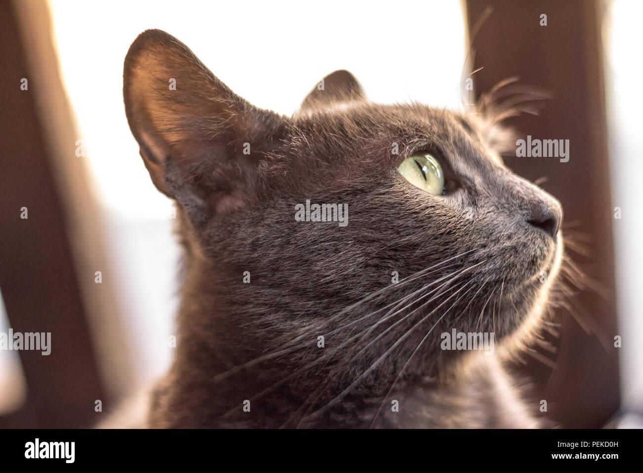Nahaufnahme Auf Das Profil Der Kopf Einer Blau Grau Streunende Katze