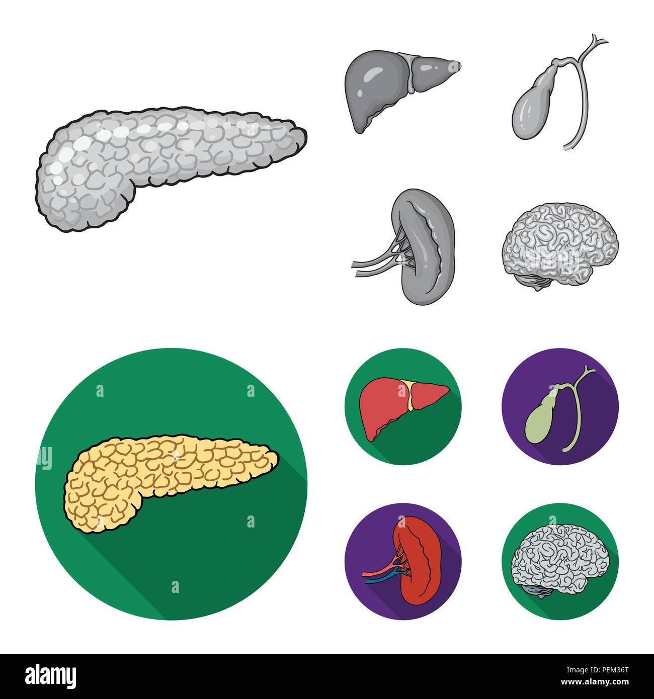 Gallbladder Kidney Stockfotos & Gallbladder Kidney Bilder - Alamy