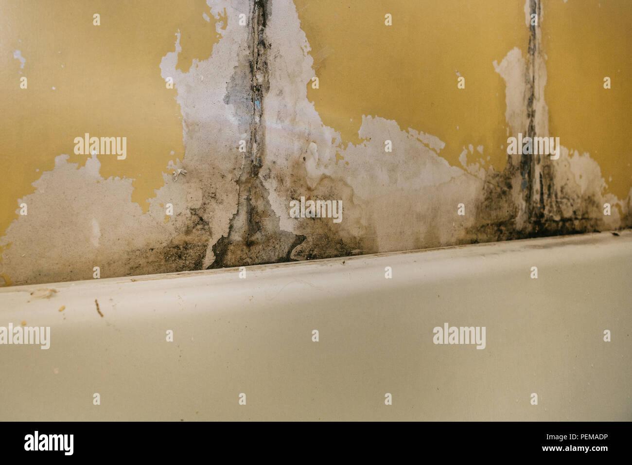 Die alte Wand im Badezimmer ist mit Schimmel im Zimmer zu feuchte ...