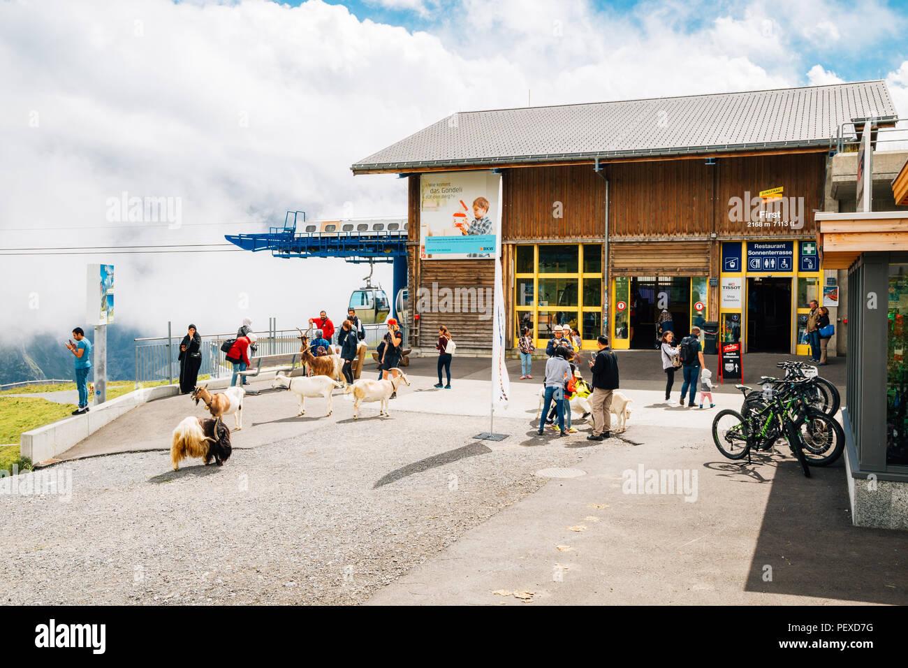 Grindelwald, Schweiz - 21 August 2016: erste Seilbahn Seilbahn Station Stockbild