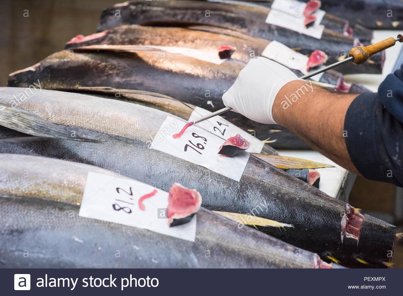 Sushi Einstufung am Fischmarkt, San Diego, Kalifornien, USA Stockbild