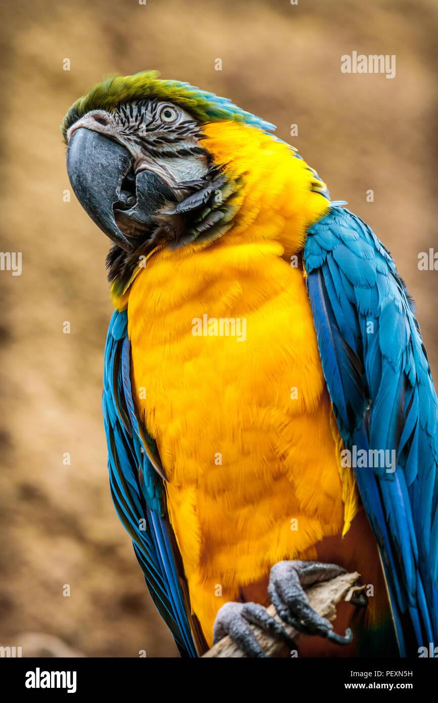 Foto von einem bunten tropischen Vogel auf einem Ast in einem Zoo thront. Stockbild
