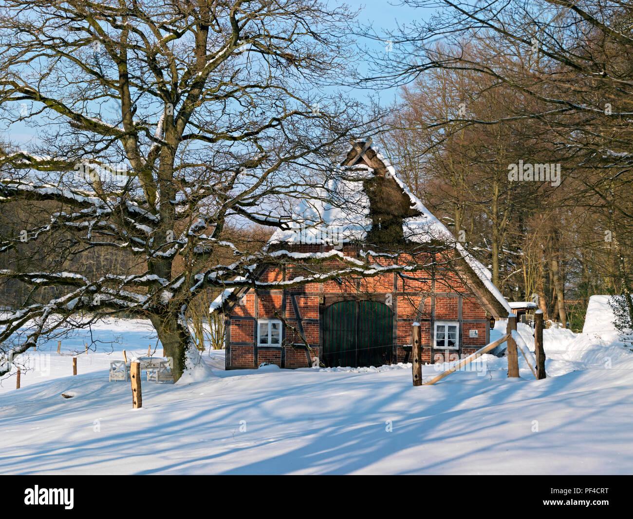 Naturpark Lüneburger Heide, Winter, altes Bauernhaus, Wilsede, Gemeinde Bispingen, Landkreis Diepholz, Niedersachsen, Deutschland | Natur res Stockbild