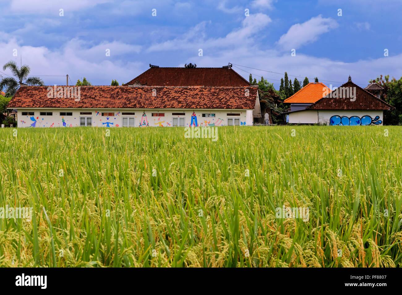 Reisfelder in Canggu, Bali Stockbild