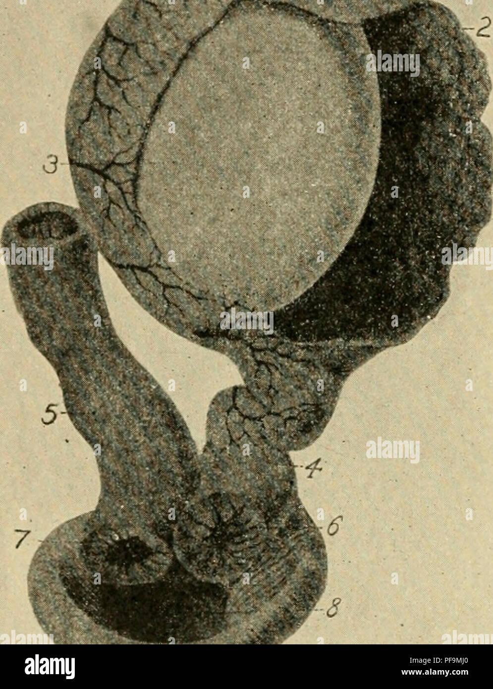 Bakterienschichten Stockfotos & Bakterienschichten Bilder - Alamy