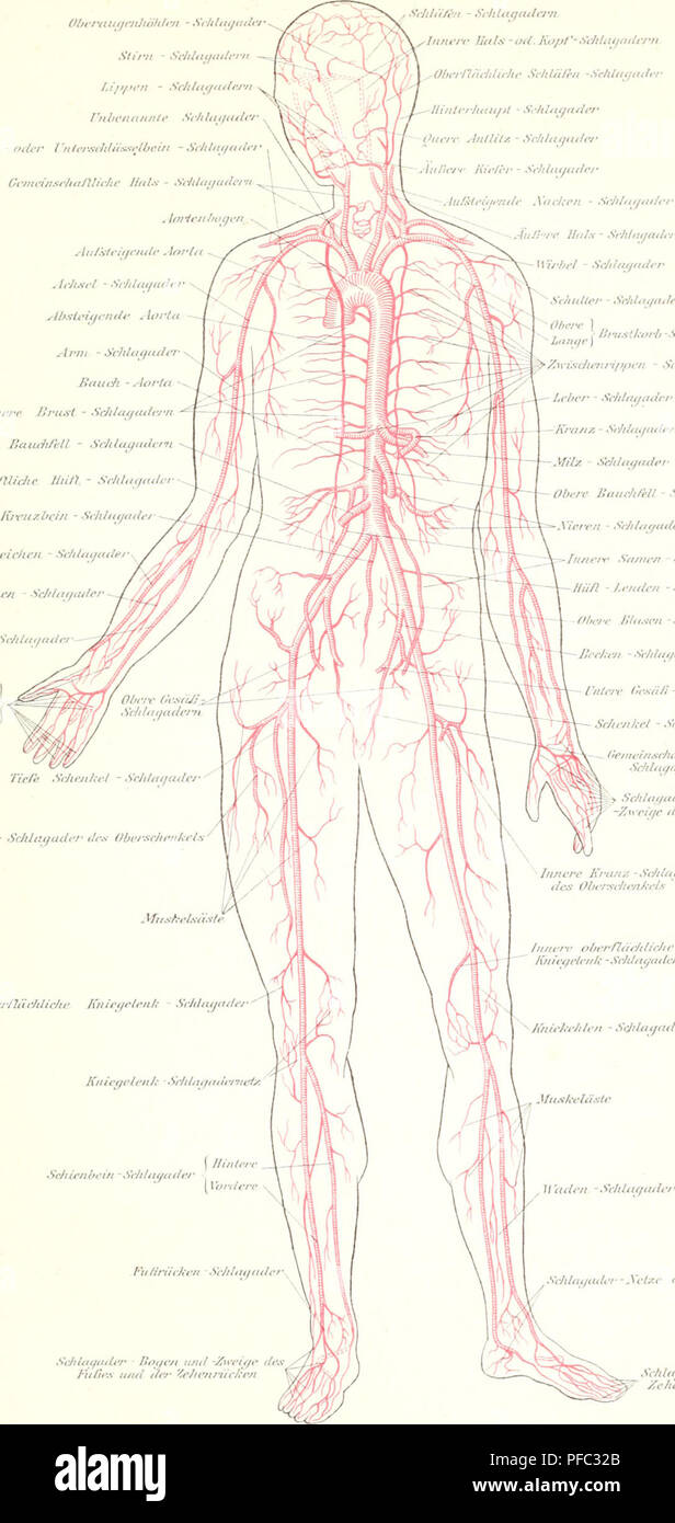 Der Mensch. Anthropologie; die menschliche Anatomie, Physiologie ...