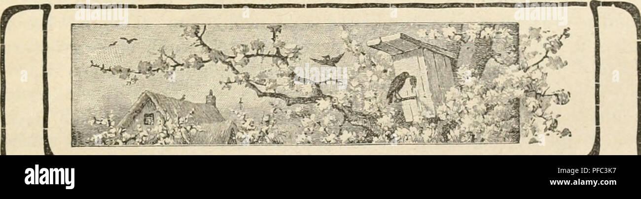 """. Der ornithologische Beobachter. Vögel, Vögel. - 171 - Farbe ein Zeichen in die Flü {? el und übergab sie dem Manne, der 25 () Körbe, Brieftauben, Föderation Colombopliile"""" / Münze - piegne betteln"""" leitete. In Comiiirii-ue wurde sterben Schwalbe am nächsten Morgen um 7 Uhr 15 Minuten, genau zu derselben Zeit wie die Tauben, freigelassen und nahm, geschwind wie der Blitz, sterben Ricli-tung nacli Norden, 5/6 für Tauben sterben zuerst planlos Umherirrten und die Richtung """"nur schwer finden konnten. Um 8 Ulir 23 Minuten traf sterben Scliwalbe in Antwerpen ein und suchte sofort ihr Nest auf. Die ersten Taub Stockbild"""