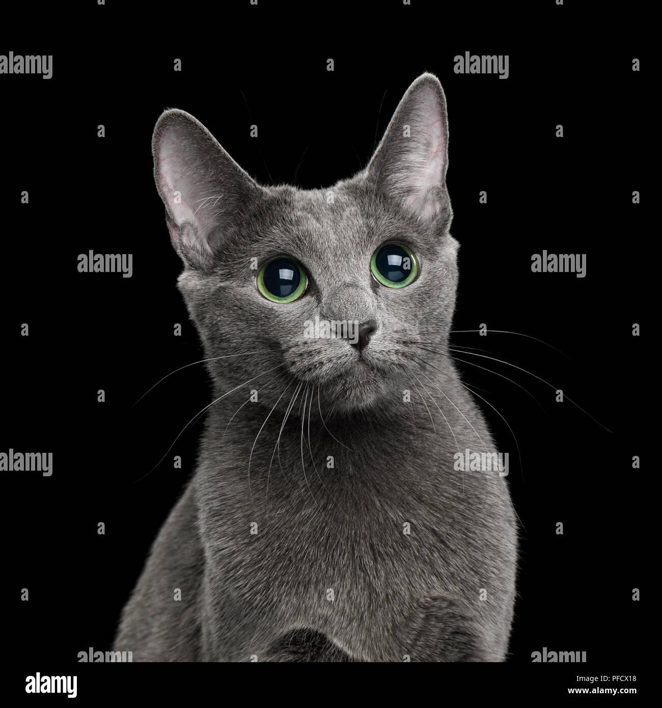 Katze Auf Russisch