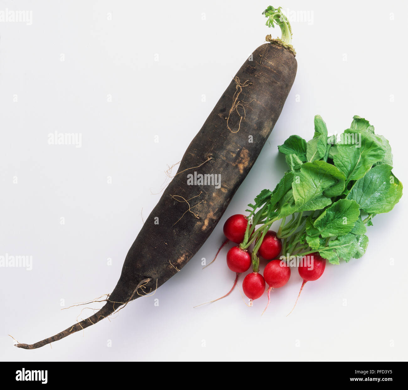 Gemüse Rettich Sparkler Ca 1000 Samen