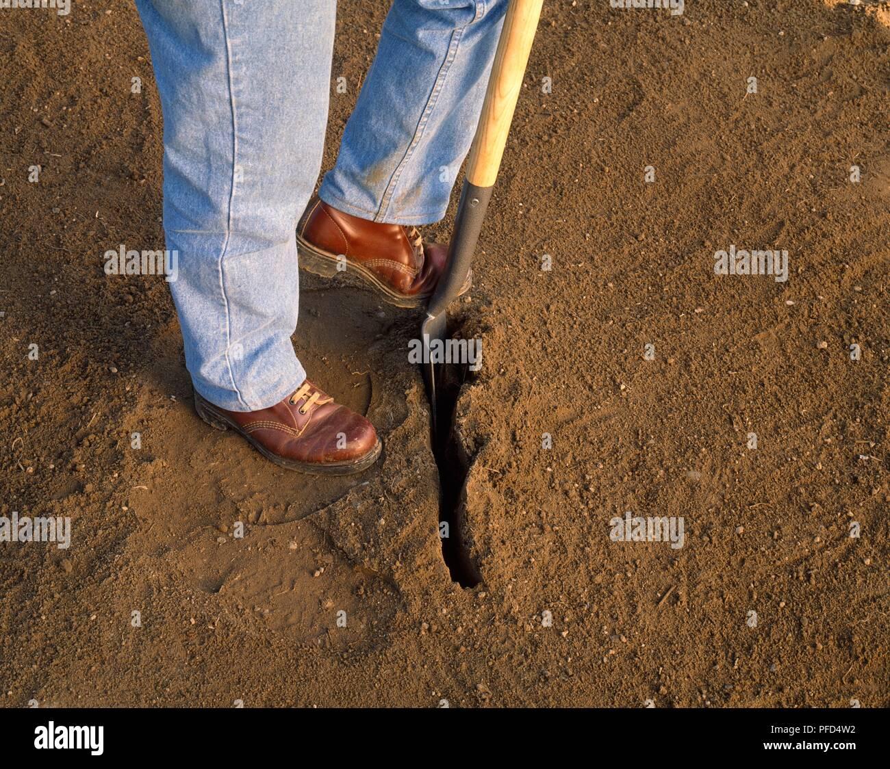 Vorbereitung ein Graben von Spaten senkrecht in den Boden mit Fuß, close-up Stockfoto