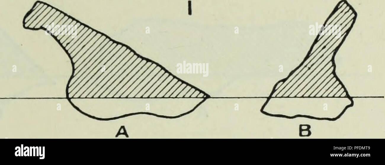 """. Die Tiefen des Ozeans; ein allgemeines Konto der modernen Wissenschaft der Ozeanographie, sich weitgehend auf die wissenschaftlichen Forschungen der Norwegischen Dampfgarer Michael Sars im Nordatlantik. Ozeanographie. IV TIEFEN UND EINLAGEN DES OZEANS 207. Diese Station (95) über 200 Exemplare der Ofen Klinker gefunden wurden, Ofen zusammen mit Fragmenten unverbrannter Kohle, auch ein Teil einer irdenen - Klinker, Kohle, ware Jar und eine Kanone - Knochen eines Ochsen. Diese Station liegt entlang der Route etc"""" des Atlantiks Büchsen, aus denen diese Exemplare vermutlich fallengelassen wurden. An Station 10, auf der Südseite der Th Stockbild"""