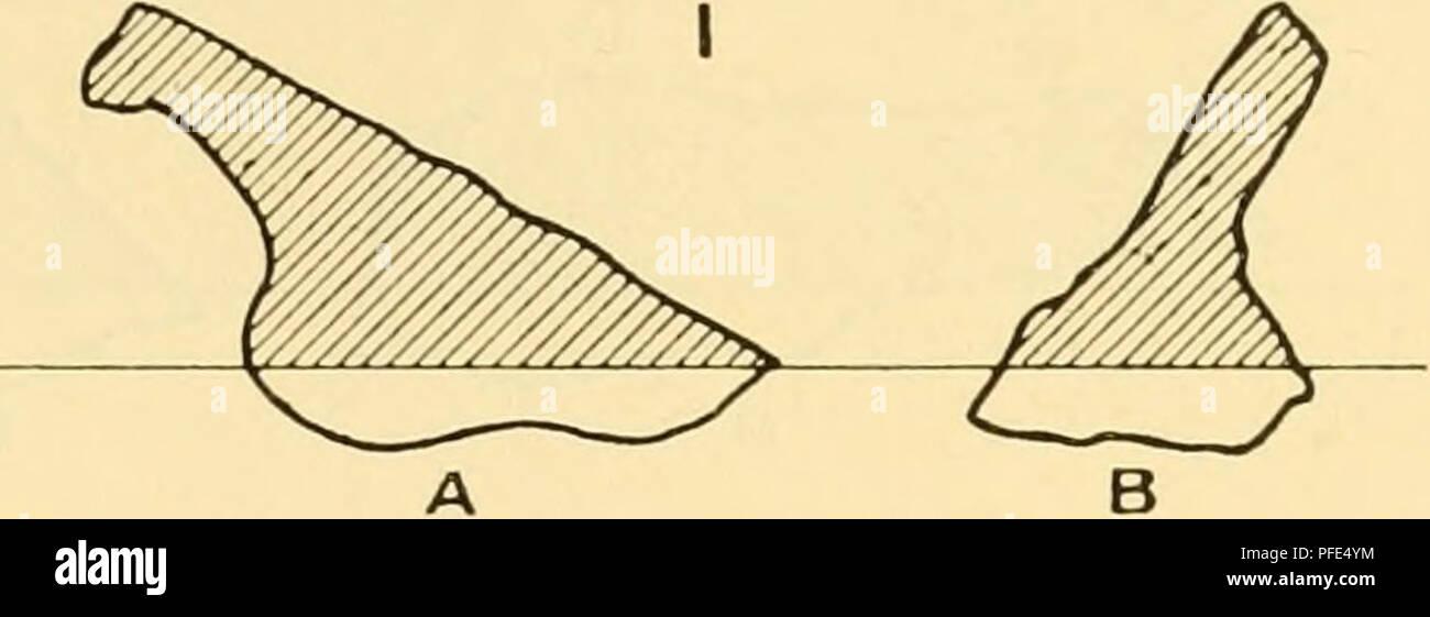 """. Die Tiefen des Ozeans: Ein allgemeines Konto der modernen Wissenschaft der Ozeanographie, sich weitgehend auf die wissenschaftlichen Forschungen der Norwegischen Dampfgarer Michael Sars im Nordatlantik. """"Michael Sars"""" North Atlantic Deep-sea Expedition (1910); Ozeanografie ; North Atlantic Ocean. IV TIEFEN UND EINLAGEN DES OZEANS 207 diese Station (95) über 200 Exemplare der Ofen Klinker gefunden wurden, Ofen zusammen mit Fragmenten unverbrannter Kohle, auch ein Teil einer irdenen - Klinker, Kohle, ware Jar und eine Kanone - Knochen eines Ochsen. Diese Station liegt auf der Strecke^^^' der Atlantic Liner, her Stockbild"""