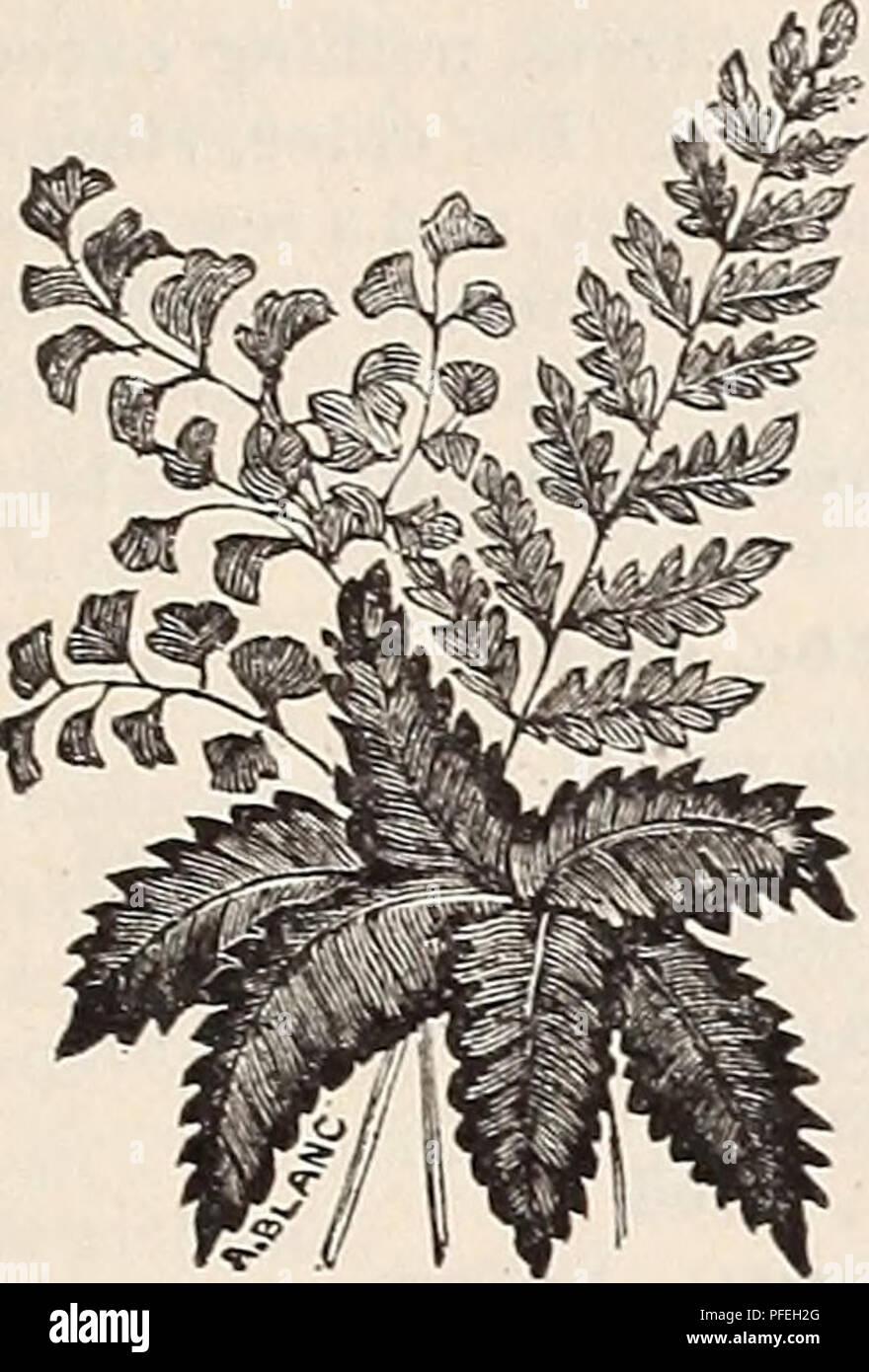 Nachdenklich Winterharter Schwarzer Mauibeerbaum Wird 15 Meter Hoch Pflanzen, Sämereien & Zwiebeln