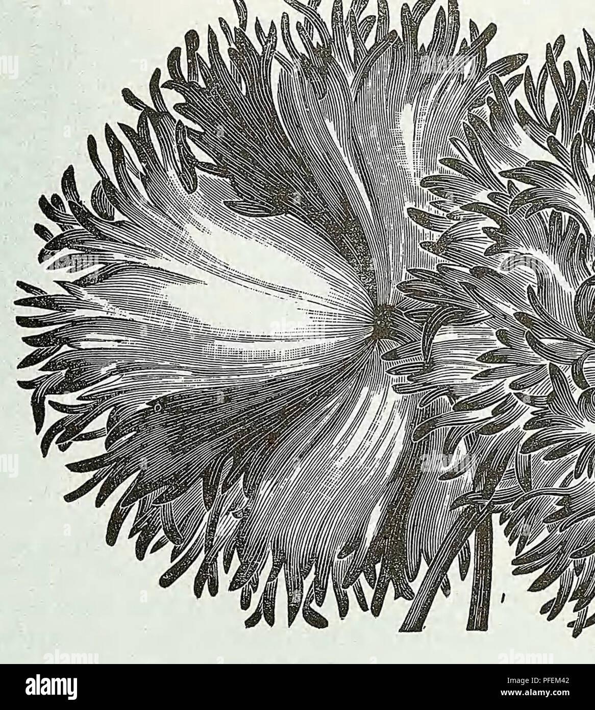 Beschreibender Katalog Der Gemüse Blumen Und Samen Baumschulen