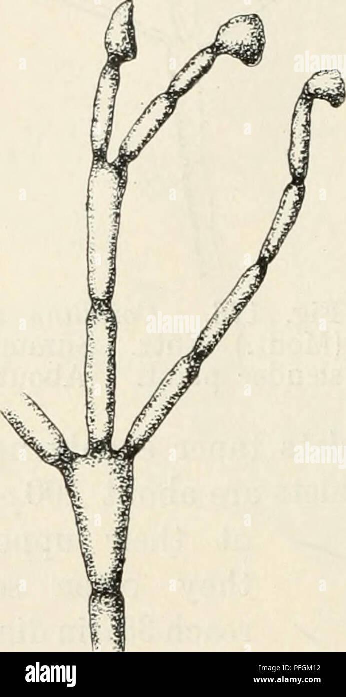 Dansk botanisk arkiv. Pflanzen, Pflanzen-- Dänemark. 190 Dansk ...
