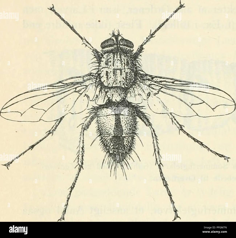 Dansk Forstzoologi Wald Tiere Und Zoologie 370 Insekter Andre