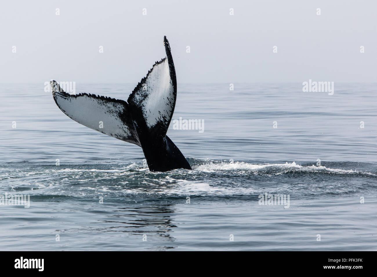Bilder von riesigen Schwanz
