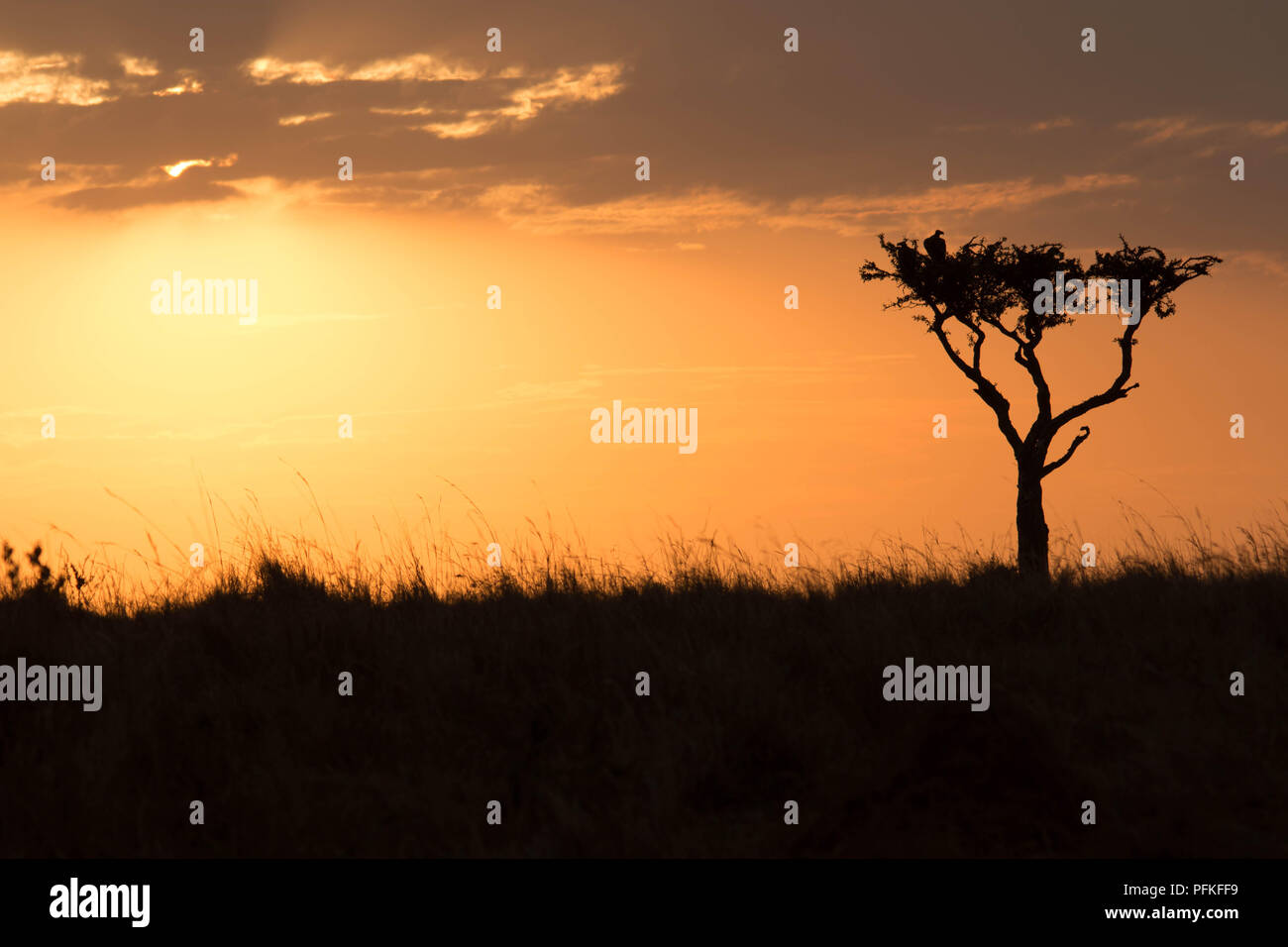 Die Masai Mara, Kenia, Game Safari Stockbild