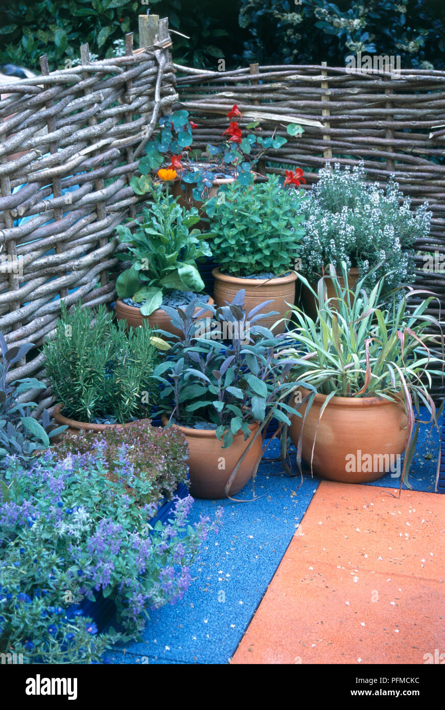 Kübelpflanzen Kräuter wie Minze, Thymian, Salbei und Rosmarin auf ...
