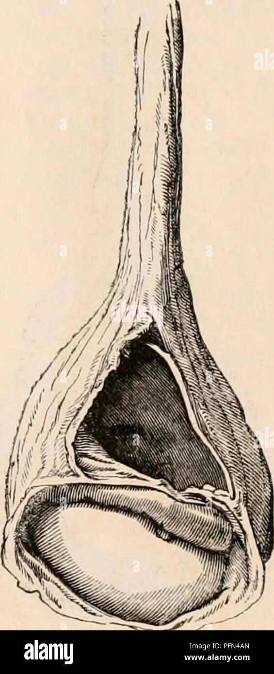 Die cyclopaedia von Anatomie und Physiologie. Anatomie, Physiologie ...