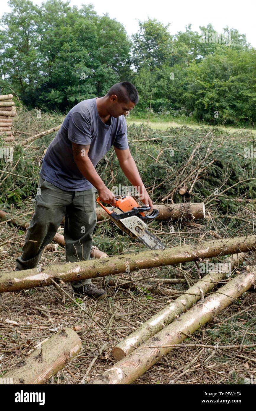 Etwas Neues genug Mann unten schneiden und Clearing Holz von Fichten zala Ungarn #RP_53