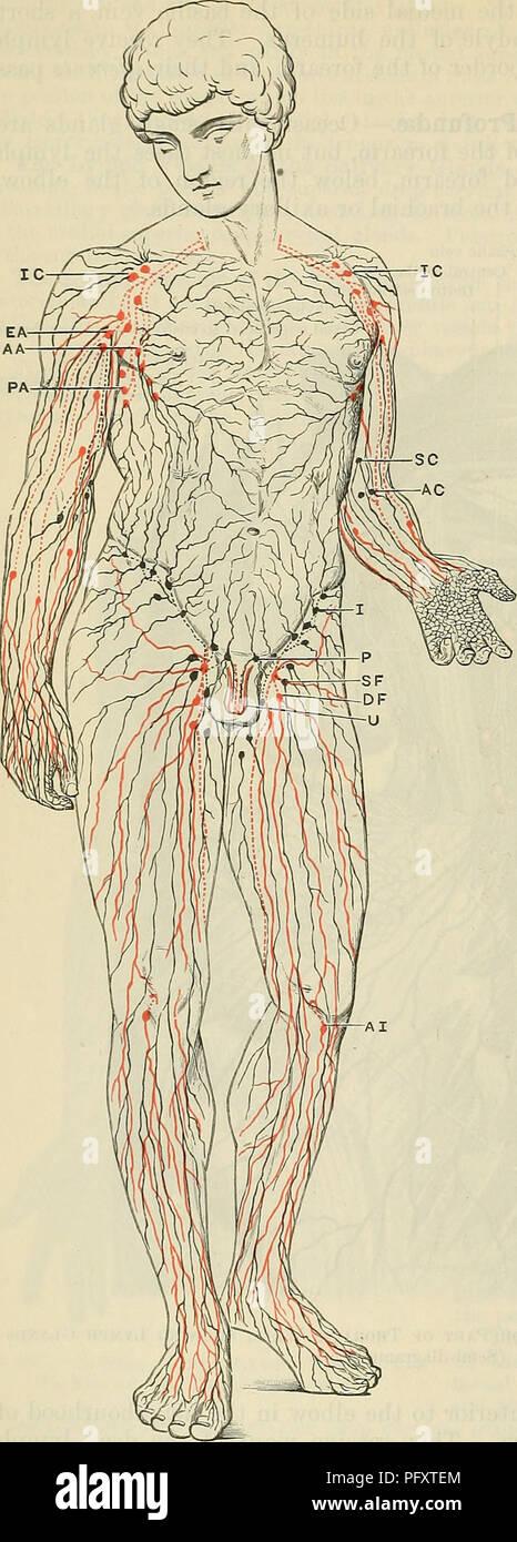Cunninghams Lehrbuch der Anatomie. Anatomie. 1003 Das GEFÄSSSYSTEM ...