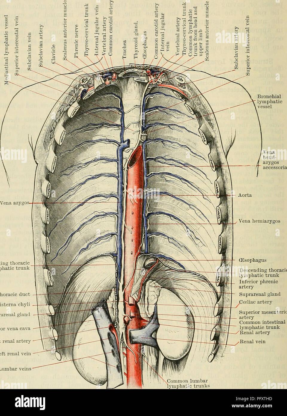 Cunninghams Lehrbuch der Anatomie. Anatomie. 996 Die VASCULAE SYSTEM ...