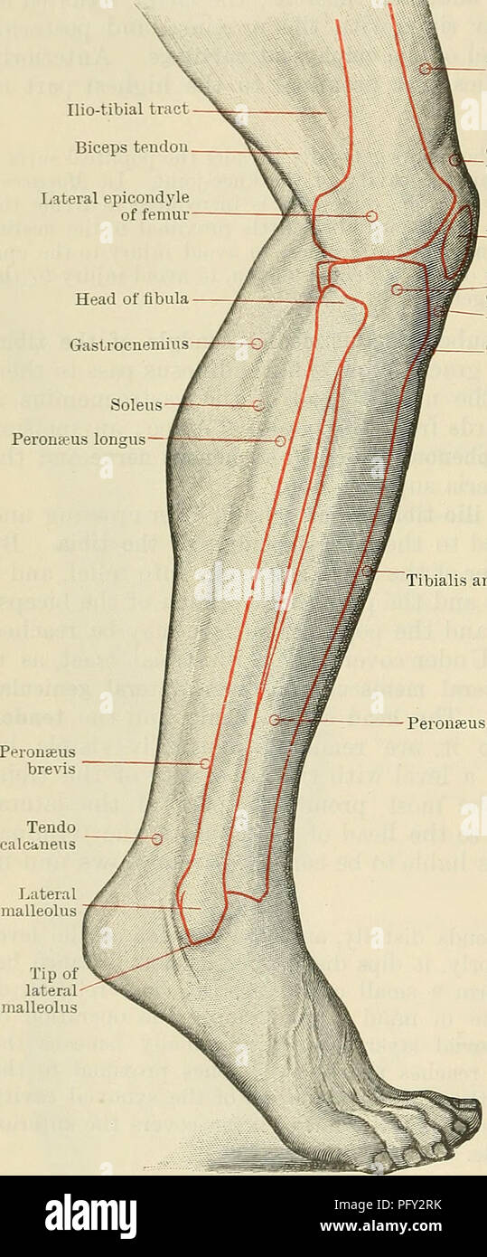Cunninghams Lehrbuch der Anatomie. Anatomie. 1462 SUEGICAL SUKFACE ...