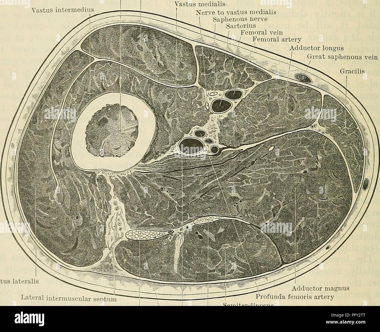 Cunninghams Lehrbuch der Anatomie. Anatomie. 1456 SUEGICAL SUKFACE ...