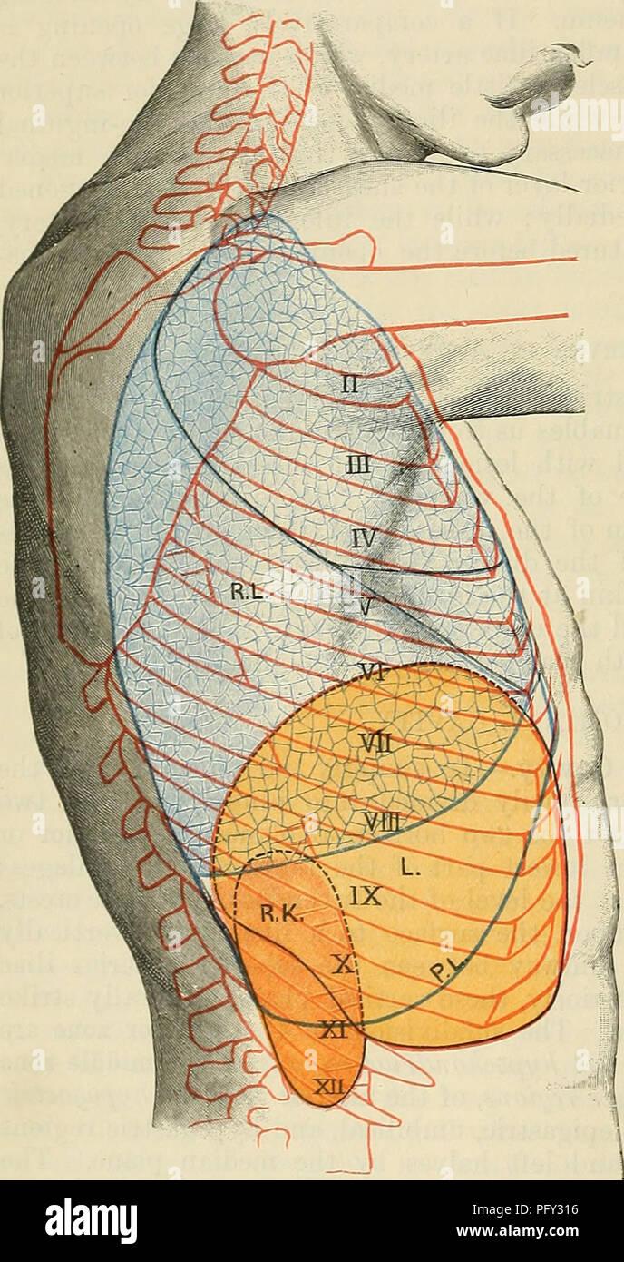 Cunninghams Lehrbuch der Anatomie. Anatomie. 1412 SUKFACE UND ...