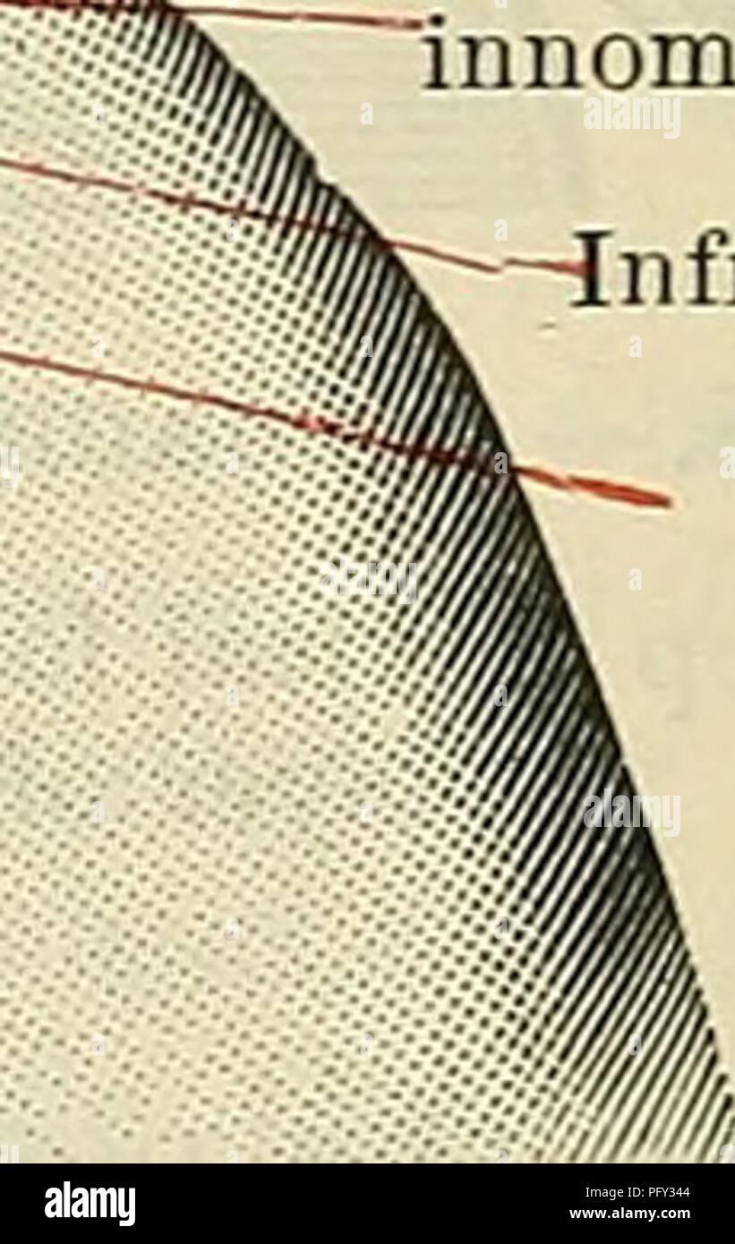 Cunninghams Lehrbuch der Anatomie. Anatomie. ygomatie Prozess der ...
