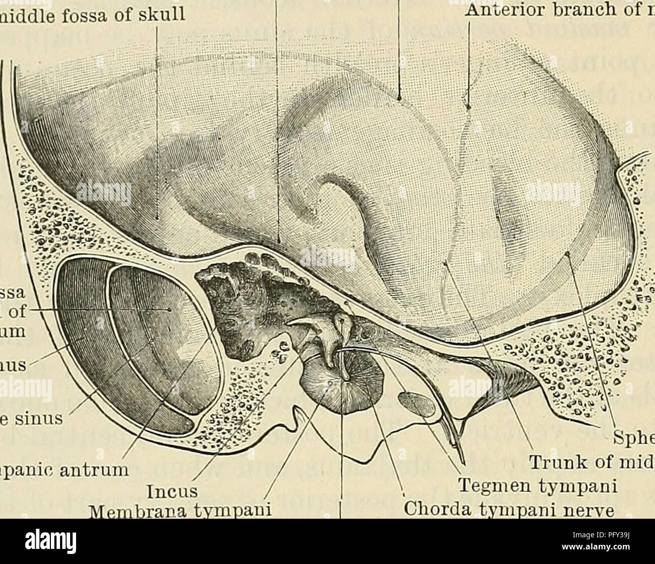 Cunninghams Lehrbuch der Anatomie. Anatomie. 1366 OBERFLÄCHE UND ...