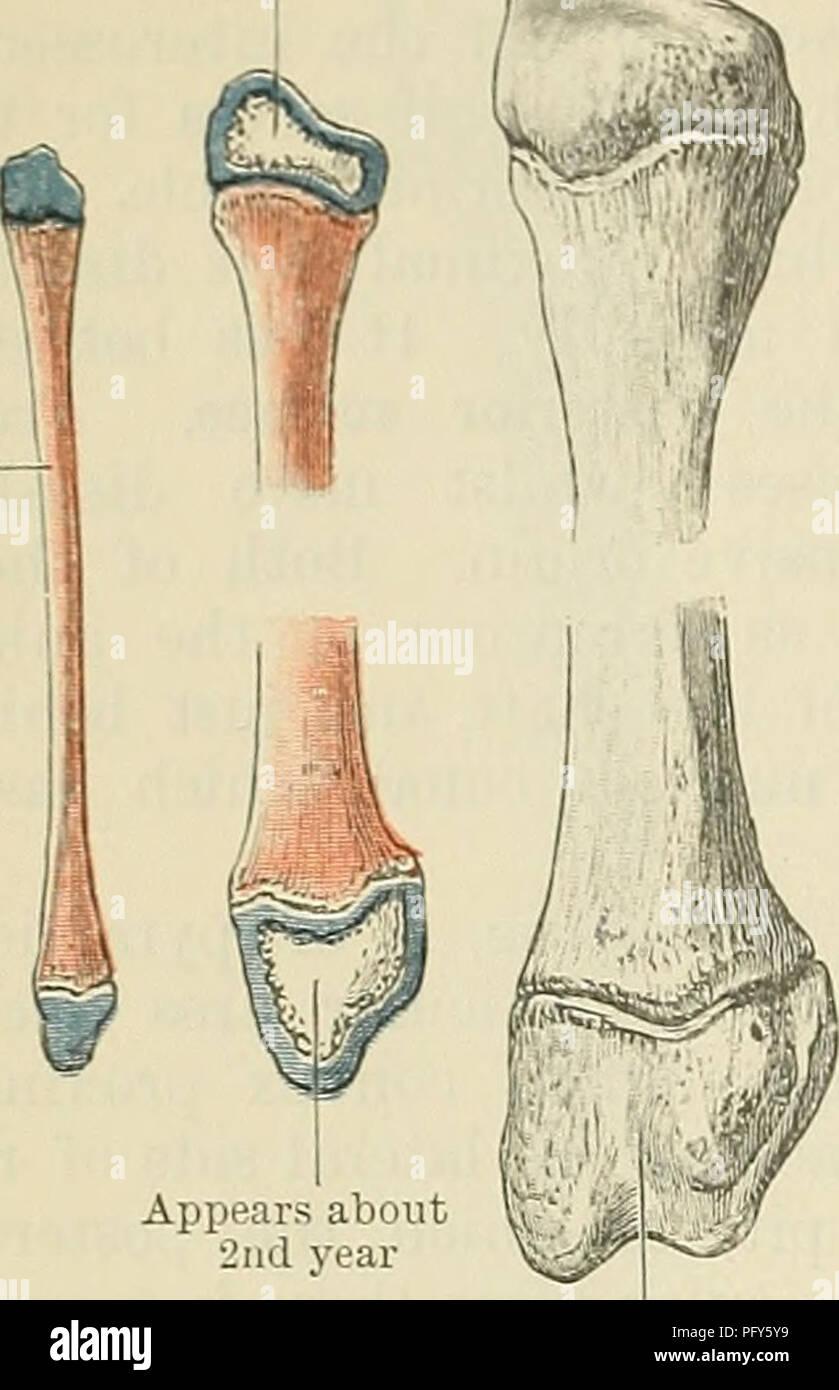 Cunninghams Lehrbuch der Anatomie. Anatomie. 254 OSTEOLOGIE. Erst ...