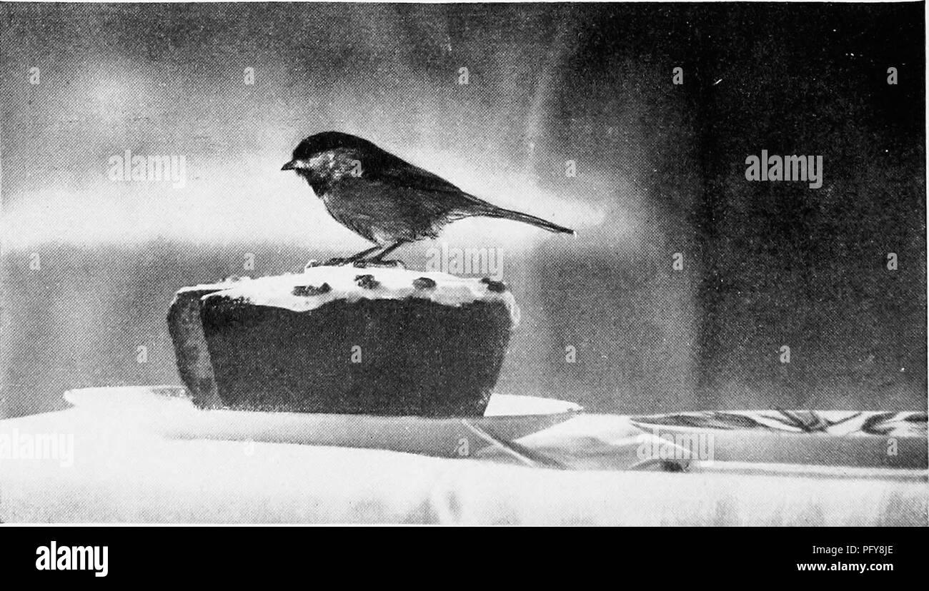 Bücherubjektvögel stockfotos & bücherubjektvögel bilder alamy