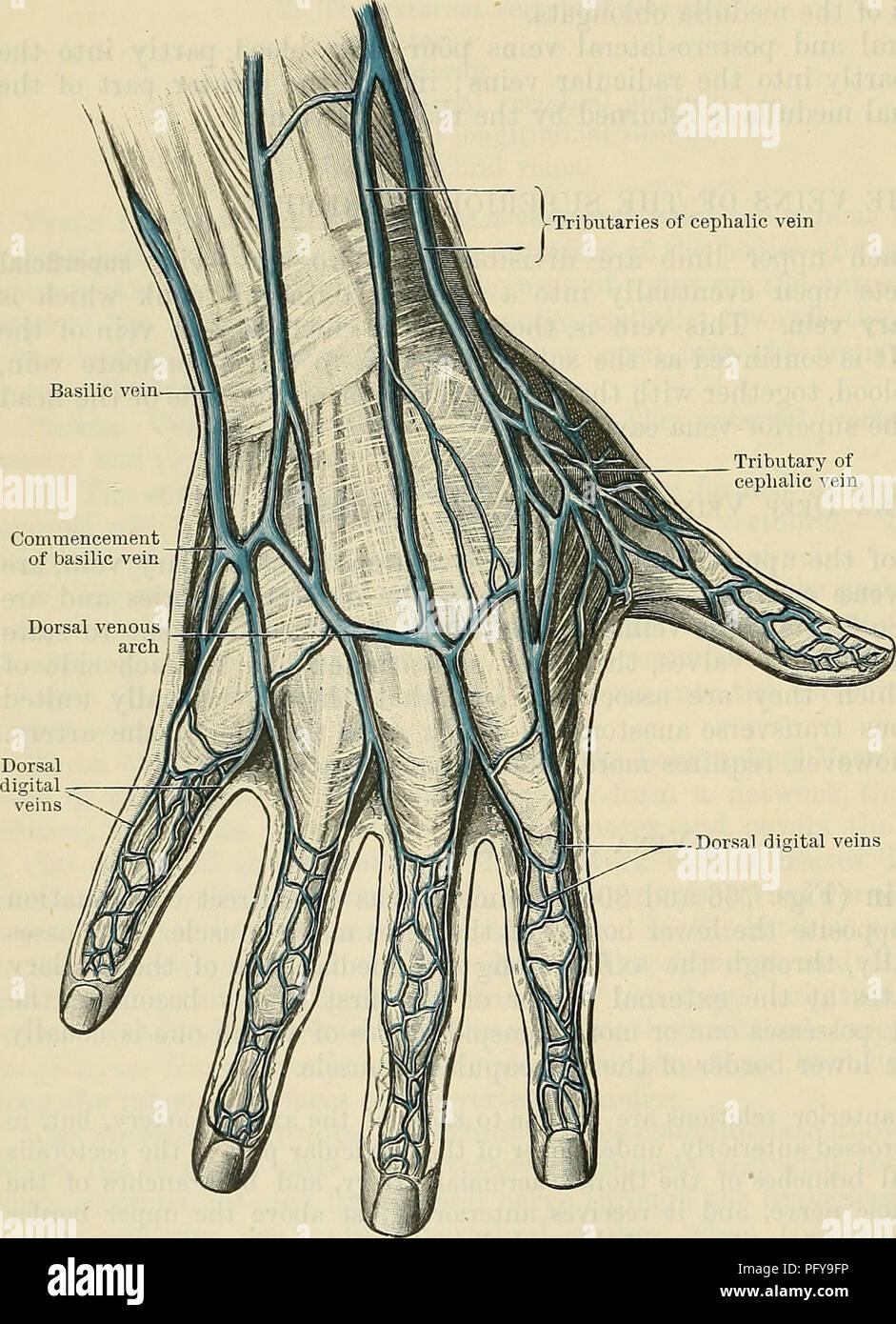 Cunninghams Lehrbuch der Anatomie. Anatomie. 978 Die VASCULAB SYSTEM ...