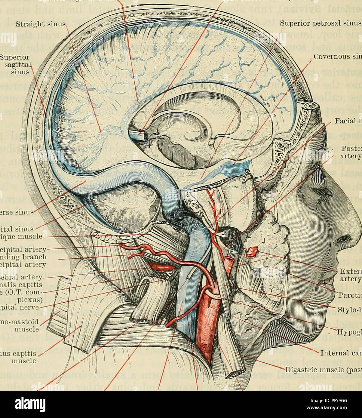 Cunninghams Lehrbuch der Anatomie. Anatomie. 972 Das GEFÄSSSYSTEM ...