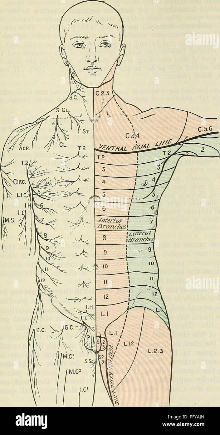 Cunninghams Lehrbuch der Anatomie. Anatomie. THOEACIC nerven. 715 ...