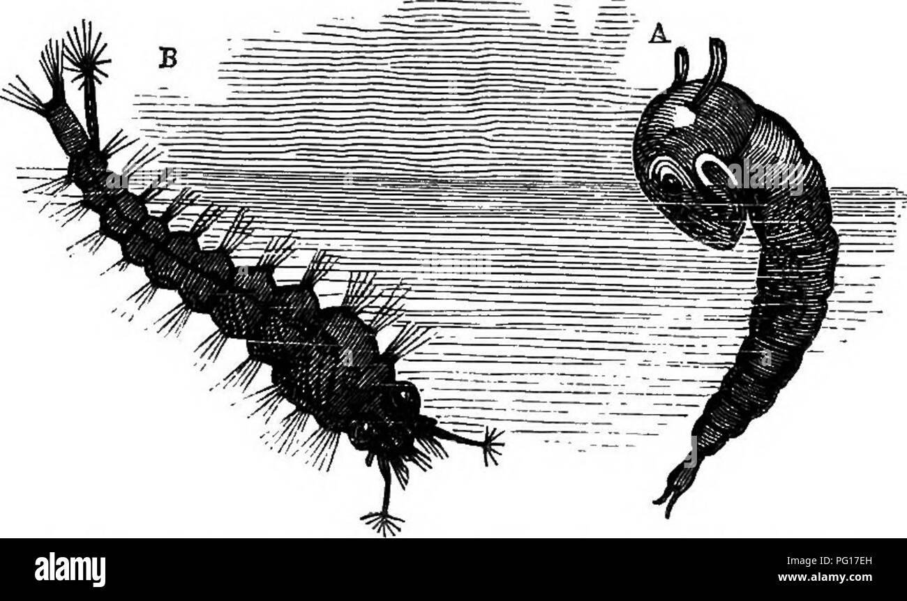 GroГџer weiГџer Schwanz ruckelt ab Big dick im Fleischlicht