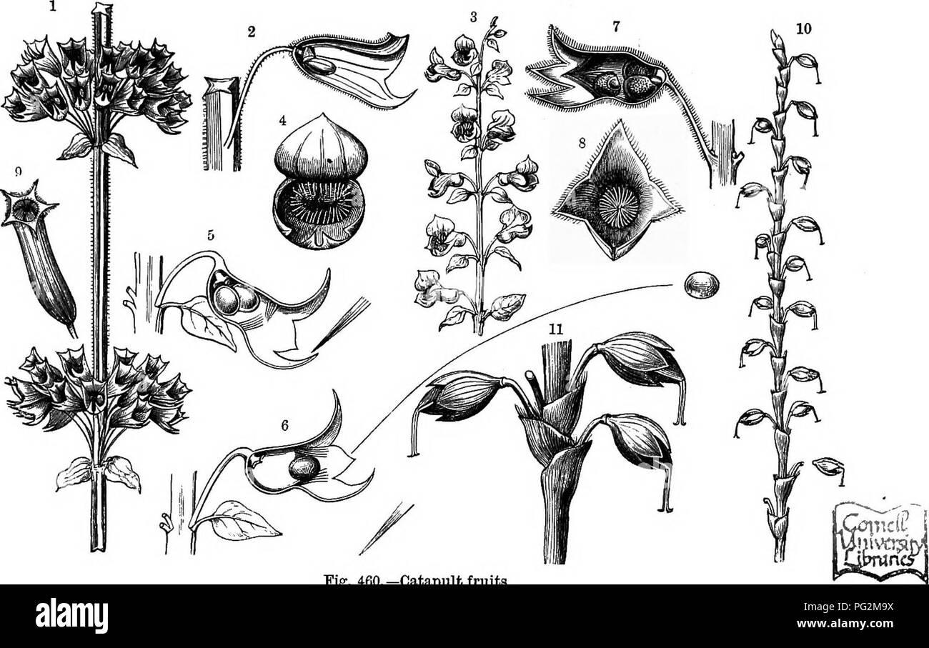Der Natürliche Verlauf Von Pflanzen Deren Formen Wachstum