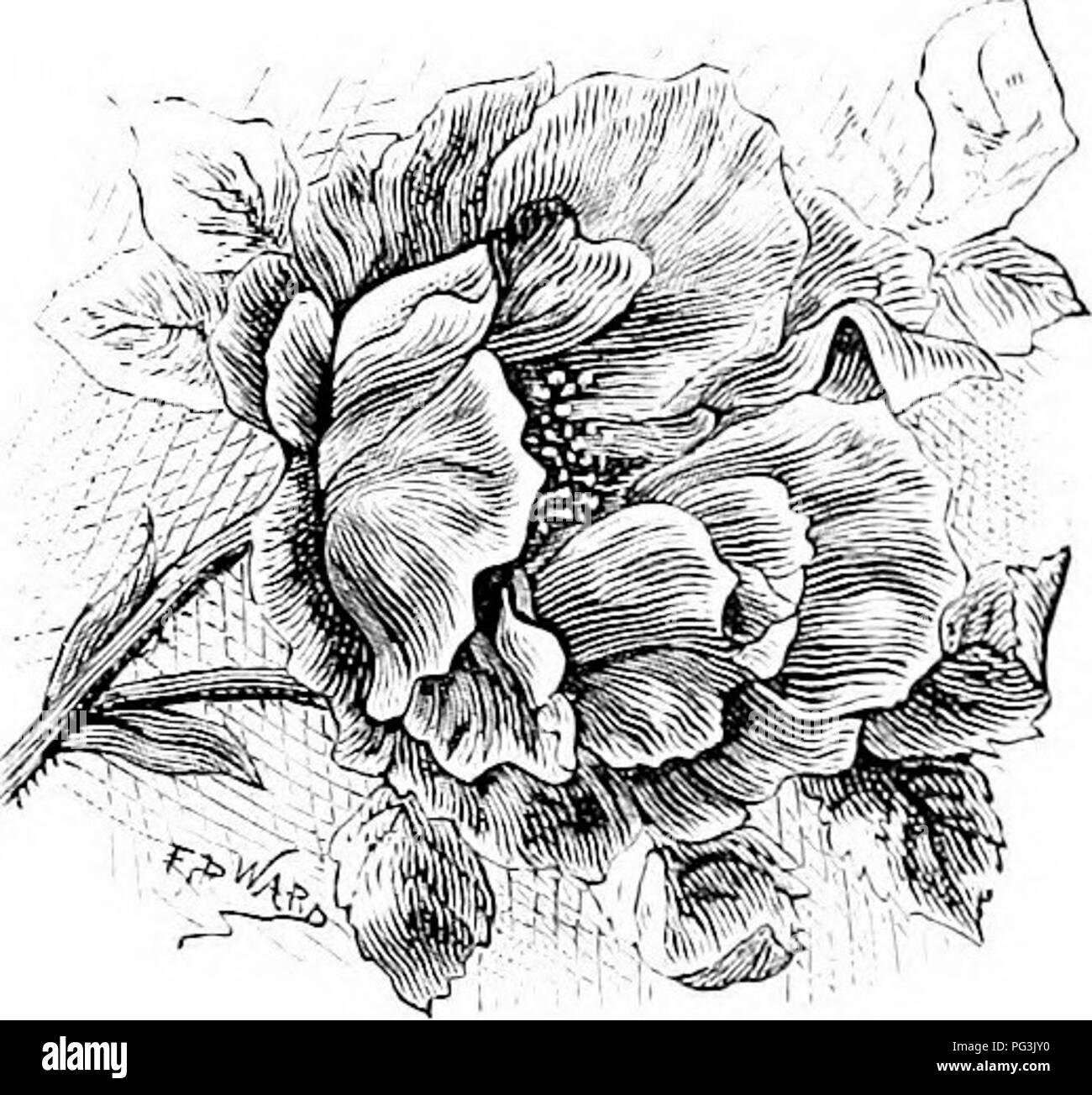 Vertraute Garten Blumen Blumen Pflanzen Zierpflanzen