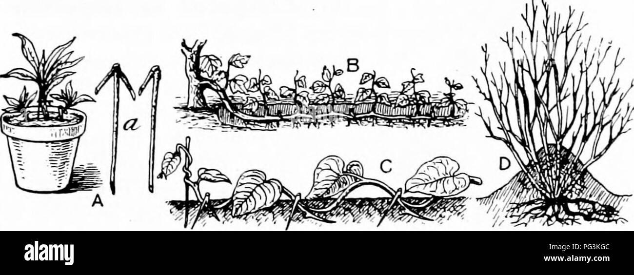 Pflanzliches Gewachshaus Und Gartnerei Praxis Pflanzenvermehrung