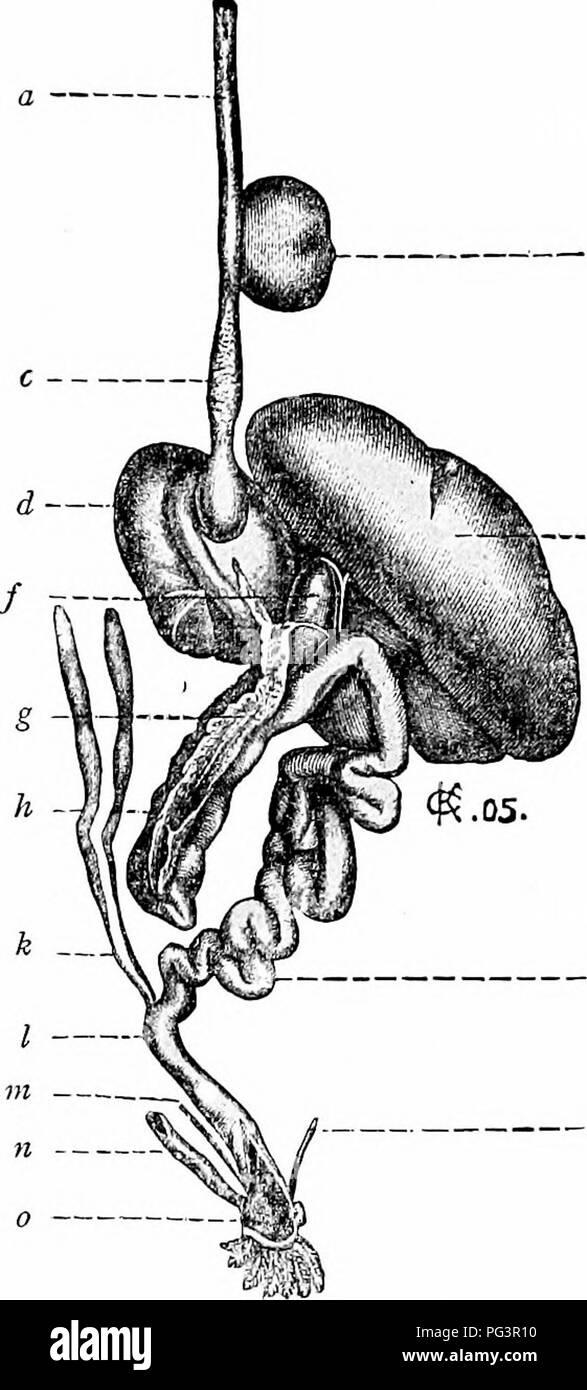 Of St Gallen Stockfotos Bilder Seite 8 Alamy Ner V Ori Ein Handbuch Der Zoologie J M Abb 6