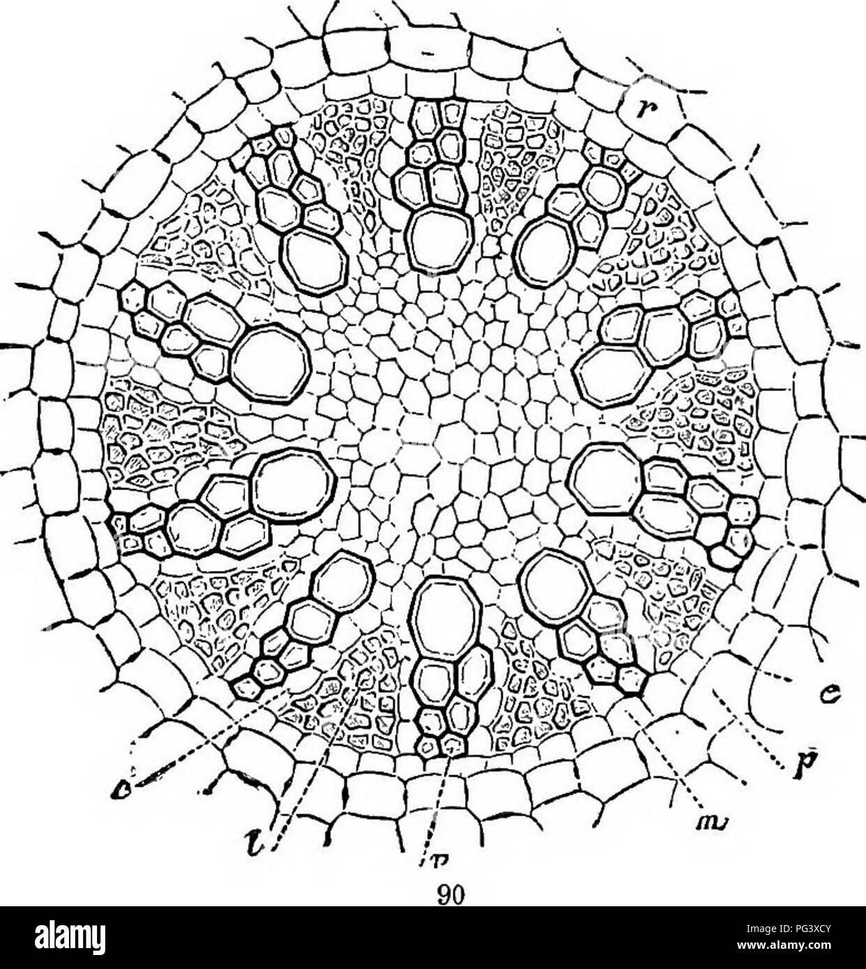 Physiologische Botanik; I. Umrisse der Histologie der phaenogamous ...