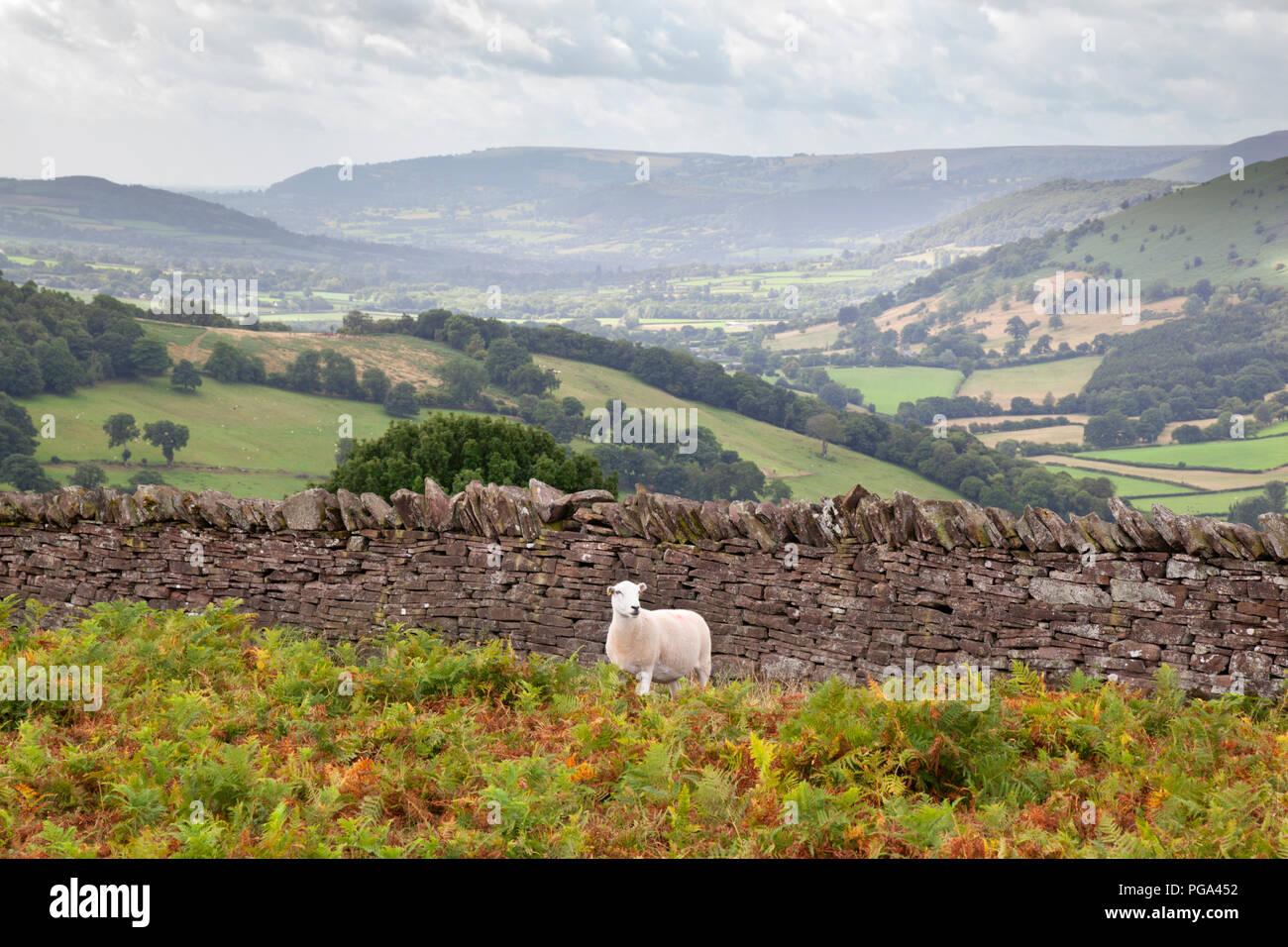 Die Schaf- und Trockenmauern Wand über Crucorney Stockbild